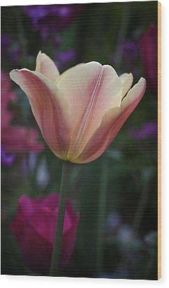 Tulip Study No. 4 Wood Print