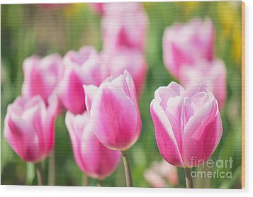 Tulip Time Wood Print by Angela Doelling AD DESIGN Photo and PhotoArt