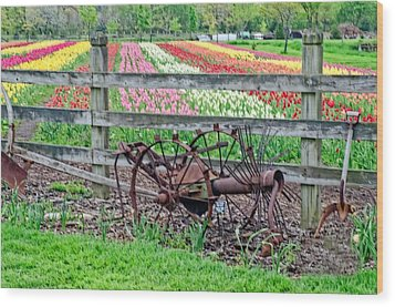 Tulip Time Wood Print by Cheryl Cencich