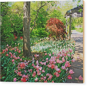Tulip Trail Wood Print
