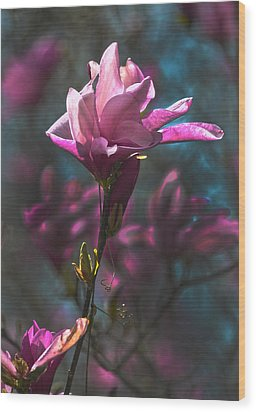 Tulip Tree Blossom Wood Print by Sandi OReilly