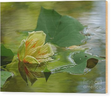 Tulip Tree Flower Wood Print