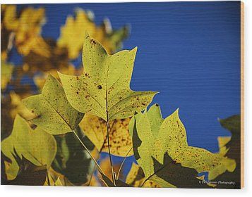 Wood Print featuring the photograph Tulip Tree In Autumn by Phil Abrams