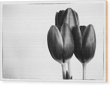 Tulip Trio Wood Print
