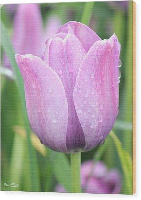 Tulip Weeps Wood Print by Bill Woodstock