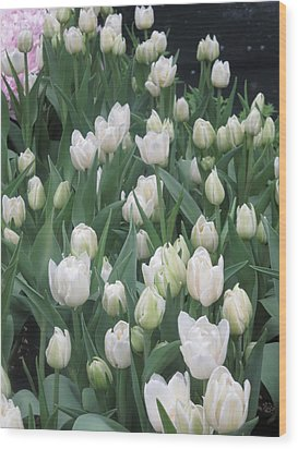 Wood Print featuring the photograph Tulip White Show Flower Butterfly Garden by Navin Joshi