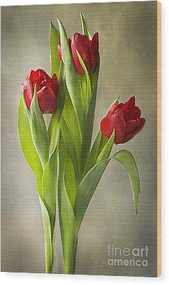 Tulipa Wood Print by Jacky Parker