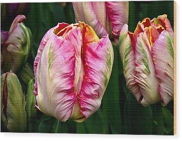 Tulips 02 Wood Print