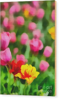 Tulips Wood Print by Amy Cicconi