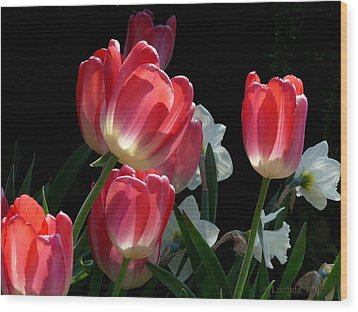 Wood Print featuring the photograph Tulips And Daffodils by Lucinda Walter