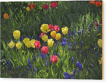 Tulips And Grape Hyacinths Wood Print