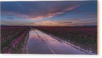 Tulips And Purple Skies Wood Print by Mike Reid