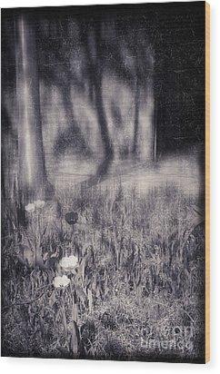 Tulips And Tree Shadow Wood Print by Silvia Ganora