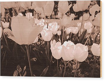 Wood Print featuring the photograph Tulips by Arkady Kunysz