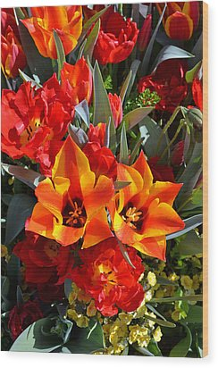 Tulips At The Pier Wood Print