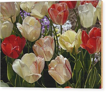 Wood Print featuring the photograph Tulips by Debra Crank