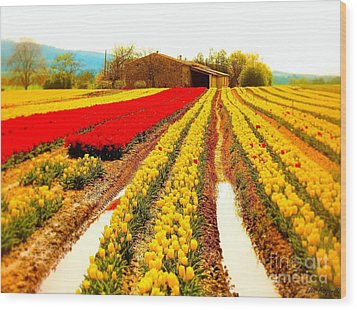 Tulips Field In Provence By A Farm Stone House France Wood Print by Flow Fitzgerald