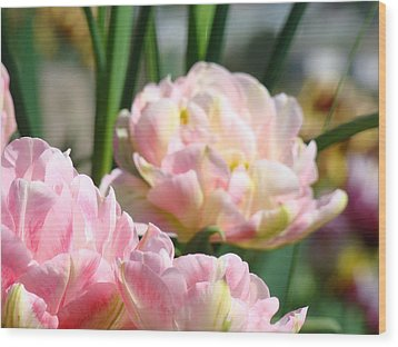 Tulips Flowers Garden Art Prints Pink Tulip Floral Wood Print by Baslee Troutman