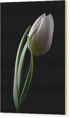 Tulips IIi Wood Print by Tom Mc Nemar