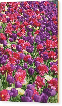 Tulips In A Meadow Wood Print
