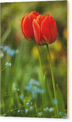 Tulips In Garden Wood Print