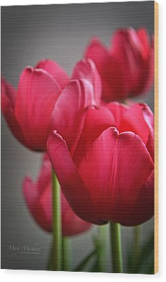Tulips In The  Morning Light Wood Print by Mary Machare