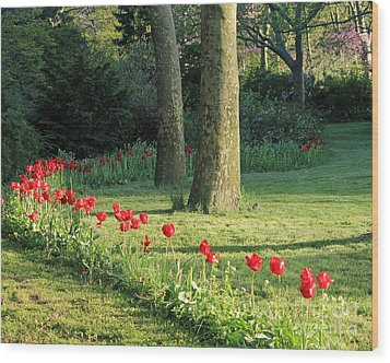 Wood Print featuring the photograph Tulips In The Park by Jose Oquendo