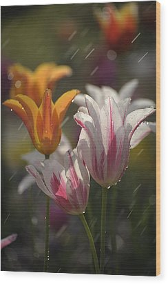 Tulips In The Rain Wood Print