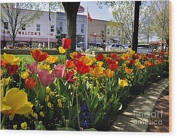 Tulips In The Spring Wood Print