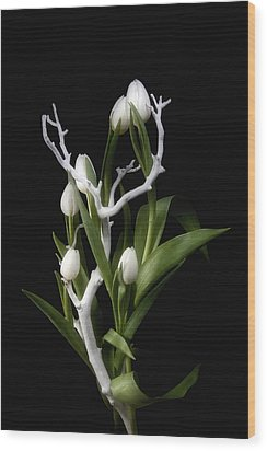 Tulips In Tree Branch Still Life Wood Print by Tom Mc Nemar