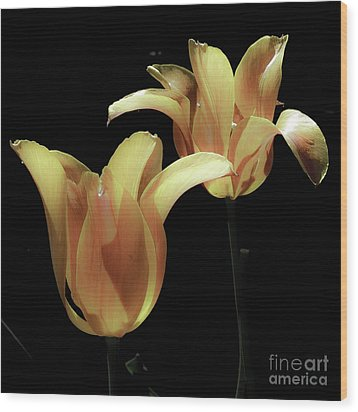 Tulips In Vaerebro Wood Print by Michael Canning