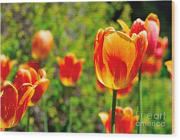 Wood Print featuring the photograph Tulips by Joe  Ng