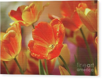 Tulips Wood Print by Kathleen Struckle
