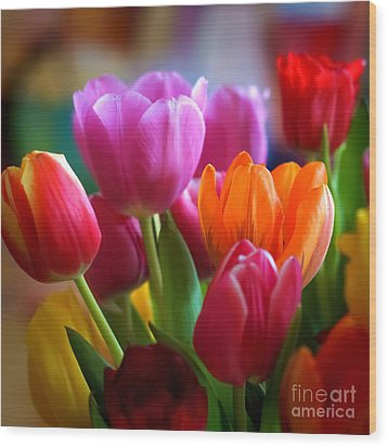Tulips Light Wood Print by Lutz Baar