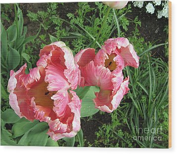 Tulips Wood Print by Marlene Rose Besso