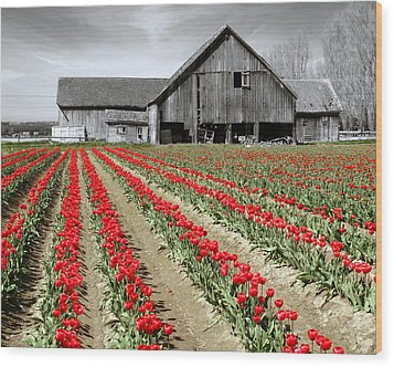 Tulips Wood Print by Matthew Ahola