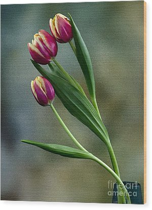 Wood Print featuring the photograph Tulips by Shirley Mangini