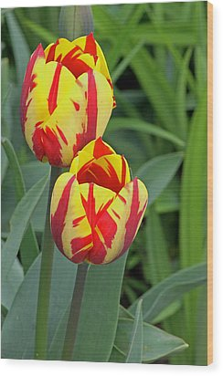Tulips Wood Print by Tony Murtagh