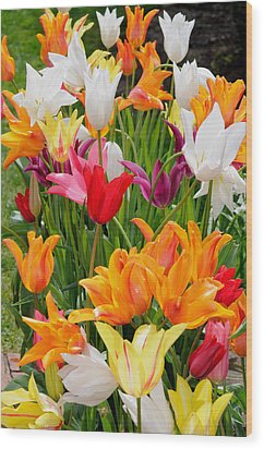 Wood Print featuring the photograph Tulips Tulips by Haleh Mahbod