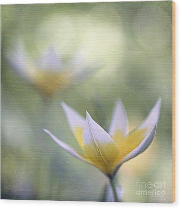 Tulips Wood Print by Uma Wirth