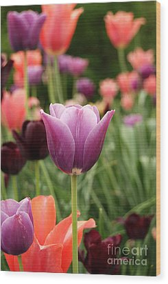 Tulips Welcome Spring Wood Print