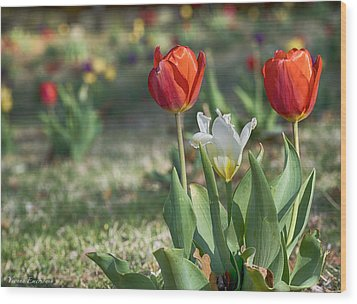 Wood Print featuring the photograph Tulips by Yvonne Emerson AKA RavenSoul