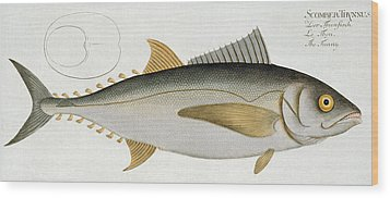 Tuna Wood Print by Andreas Ludwig Kruger
