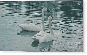 Tundra Swans Wood Print by Kathleen Struckle