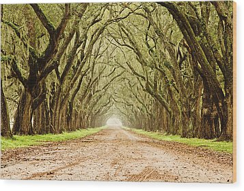Tunnel In The Trees Wood Print by Scott Pellegrin