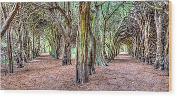 Tunnels Of The Intertwined Wood Print by Semmick Photo