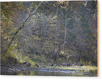 Turkey Crossing At Big Hollow Wood Print by Michael Dougherty