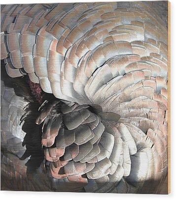 Wood Print featuring the photograph Turkey Siesta by Diane Alexander