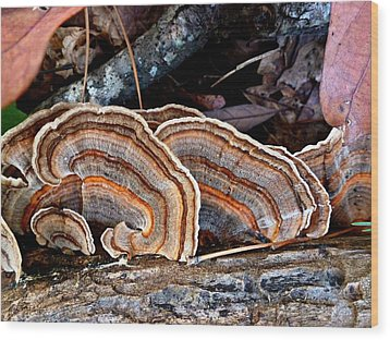 Wood Print featuring the photograph Turkey Tail Fungi In Autumn by William Tanneberger