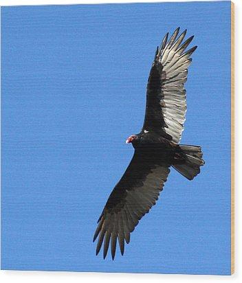 Turkey Vulture In Flight Wood Print by James Hammen